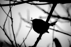 Silhouette of bird in tree Royalty Free Stock Photo