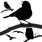 Silhouette birds. Birds silhuoette isolated on white bacground Stock Images