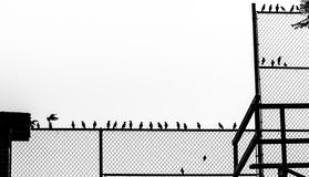 Silhouette of birds on baseball fence Royalty Free Stock Photo
