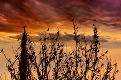 Silhouette of birds Royalty Free Stock Photography