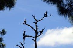 Silhouette of birds Stock Photos