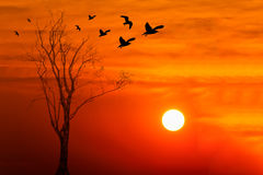 Silhouette of birds with dead tree on sunrise Stock Photo
