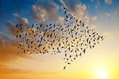 Silhouette of birds flying in arrow formation. Silhouette of birds flying in arrow formation at sunset sky Stock Photos