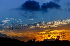 Silhouette of birds flying pass sunset and orange sky Royalty Free Stock Photography