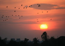Silhouette birds flying at sunset Stock Photo