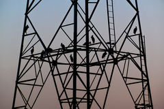 Silhouette birds sitting on high voltage pole early in the evening Royalty Free Stock Images