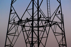 Silhouette birds sitting on high voltage pole early in the evening Stock Photos