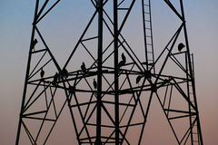 Silhouette birds sitting on high voltage pole early in the evening. With blue sky stock photo