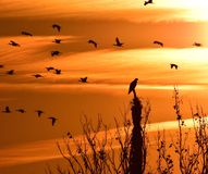 Silhouette of birds Stock Photos