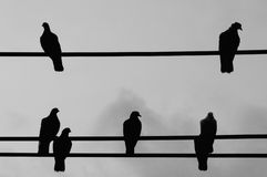 Silhouette birds which hanging on wire. Stock Photography