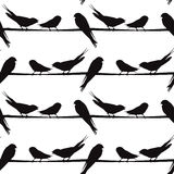 A silhouette of birds on a  wire, vector Stock Image