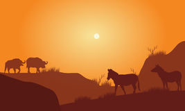 Silhouette of bison in hills Royalty Free Stock Photography