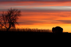 Silhouette of bison and tree at sunset. Silhouette of lonely bison and tree in Roosevelt National Park in North Dakota at sunset Stock Image