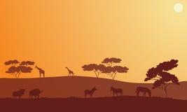 Silhouette of bison, zebra and giraffe Stock Photos
