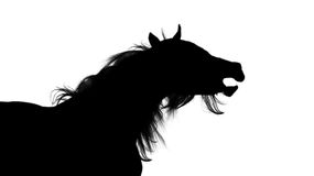 Silhouette of a black Arabian stallion Royalty Free Stock Photos