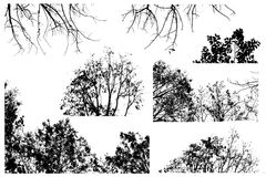Silhouette black branch and tree forest set isolate on white background Stock Photos