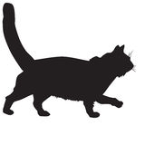 Silhouette of a black cat-ill Royalty Free Stock Photos