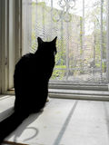Silhouette of black cat seated by the open window in spring. Silhouette of black cat seated by the open window in spring day Royalty Free Stock Photo