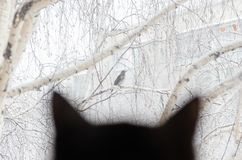 Silhouette of a black cat watching the bird through the window. Silhouette of a black cat watching a bird through a window in snowy weather Stock Photos