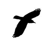Silhouette of a black crow on a white background Stock Image