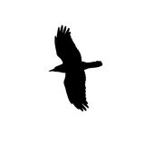 Silhouette of a black crow on a white background Stock Photo