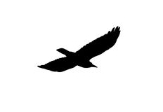 Silhouette of a black crow on a white background Royalty Free Stock Photos