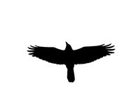 Silhouette of a black crow on a white background.  Stock Images