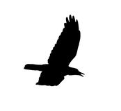 Silhouette of a black crow on a white background.  Stock Photography