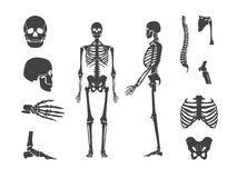 Silhouette Black Human Skeleton and Part Set. Vector vector illustration