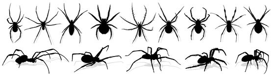 Silhouette of black spider. Stock Photography