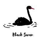 Silhouette of a black swan. Royalty Free Stock Image