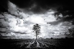 Silhouette Black and White Big tree Background Mountain, Dark Sk. Y, Horrible, Horror Stock Photos