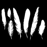 Silhouette black and white monochrome feather set isolated vector Royalty Free Stock Photos