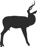 Silhouette of a blackfaced impala looking back. Digitally hand drawn vector illustration Stock Image
