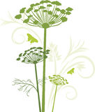 Silhouette of blooming fennel isolated on the white. Illustration Royalty Free Stock Images