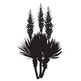 Silhouette of the blossoming yucca plant. Silhouette of a large plant of a yucca Yucca filamentosa with flowers Royalty Free Stock Photography
