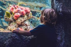 Silhouette of a boy looking at fish in the aquarium Royalty Free Stock Image