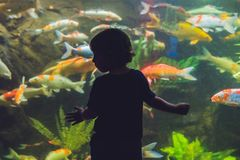 Silhouette of a boy looking at fish in the aquarium Stock Images