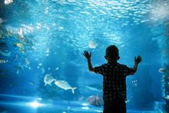 Silhouette of a boy looking at fish in the aquarium. royalty free stock photo