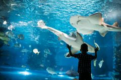 Silhouette of a boy looking at fish in the aquarium. royalty free stock photography
