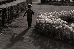 Silhouette of a boy running among flowers Royalty Free Stock Photography