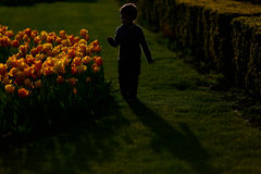 Silhouette of a boy running, yellow flowers Stock Photography