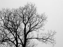 Silhouette branch of bald tree in the white fog in winter. Morning royalty free stock photography