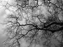Silhouette branch dead tree. Black and white picture Stock Photography