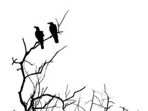 Silhouette branch of dead tree and crow Stock Images