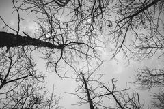 Silhouette branch tree. Silhouette of a branch tree on gray sky Stock Photography