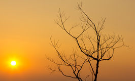 Silhouette branch of tree sunset Royalty Free Stock Photo