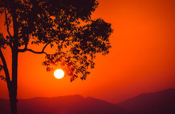 Silhouette branch tree at sunset Royalty Free Stock Photo