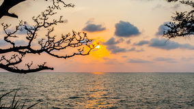 Silhouette of branch tree with sunset over sea Stock Photos