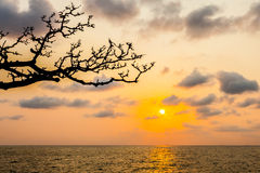 Silhouette of branch tree with sunset over sea Stock Photography